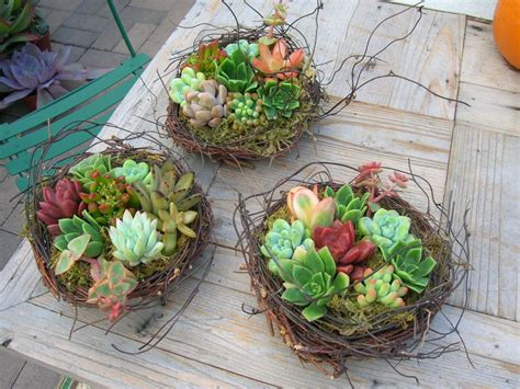 gorgeous succulent planters instantly beautifying your