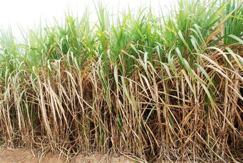 bioetanol adalah berguru bioetanol pada brazil bebeja com