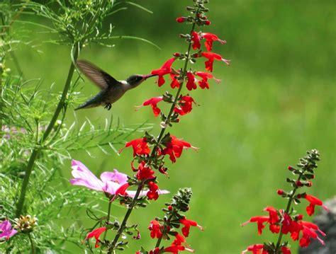 Sedona Hummingbird Garden Design Hummingbird Garden Layout