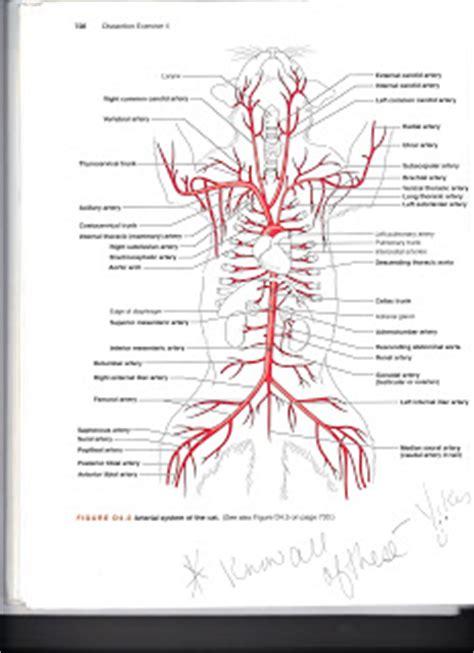 veins and arteries diagram kersey e portfolio bio211 2011 04 10