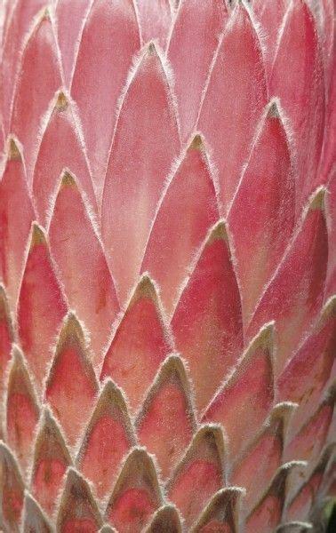 color pattern nature 106 best desktop wallpaper images on pinterest