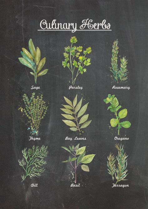 free printable herb poster culinary herbs chalkboard wall poster decor by