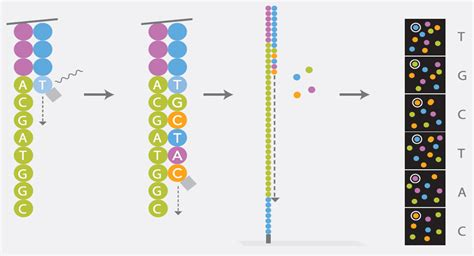 illumina sequencing method next generation sequencing cegat gmbh