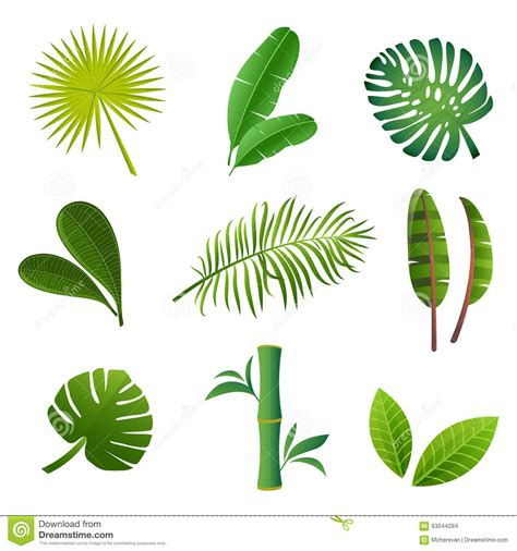 imagenes de flores y arboles tropical plants set vector illustration of green leaves