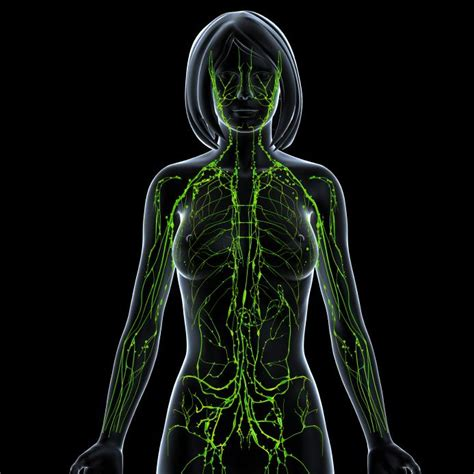 Detox Lymphatic System Naturally by Therapies To Detox The Lymphatic System