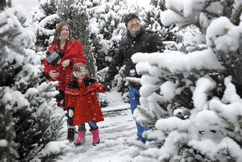 christmastree farms goodforkids ct stung by the popularity of trees tree farms appeal to tradition chicago tribune