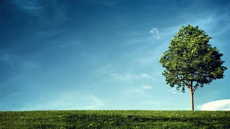 define tree open field wallpaper hd wallpapers