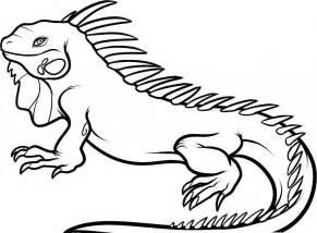 iguana coloring page free printable iguana coloring pages for