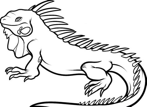 Coloring Page Iguana | free printable iguana coloring pages for kids