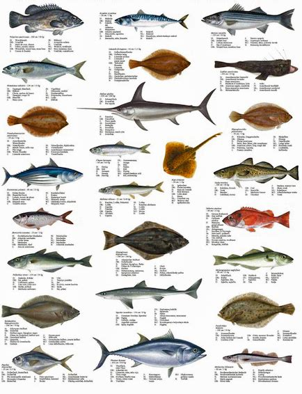 cadenas definition in spanish many young fish moving north with adults as climate