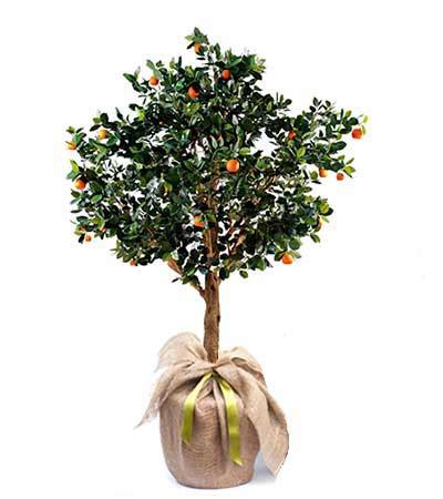 Bueno  Plantas Terraza #3: Naranjo-planta.jpg
