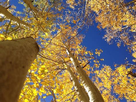 california fall colors time to start planning for california fall color kcet