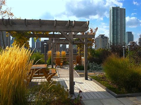 rooftop alliance formed in sacramento loftgardens landscape architecture
