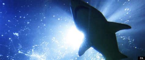 man drags shark behind boat shark drags kayak fisherman for half mile ride off devon coast