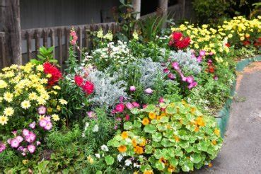 Winter Flower Gardens Annual Plants Annual Flowers Annuals Winter Flowers Biennials Perennials
