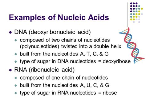 exle of nucleic acid carbon based compounds ppt