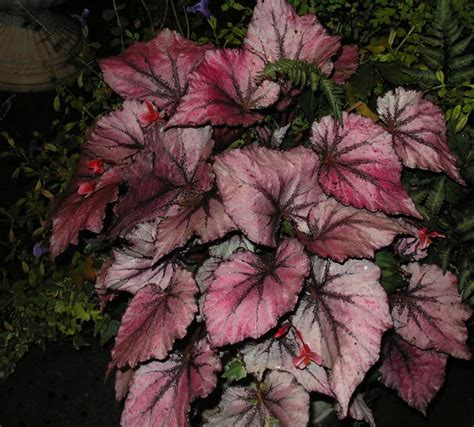 houseplant quiz to help recognize and identify the most