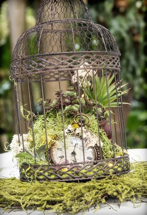 Picture Of a vintage cage with moss, succulents and a