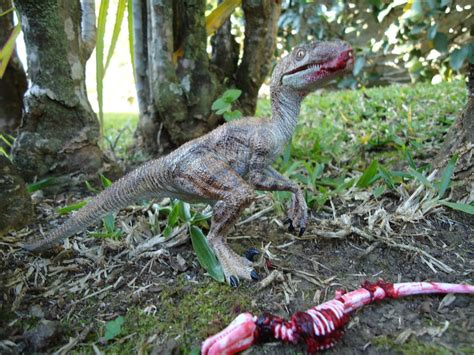 what does velociraptor eat it the velociraptor thinglink