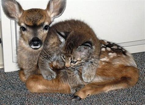 most adorable animals cool animals pictures most adorable animal pairings pictures