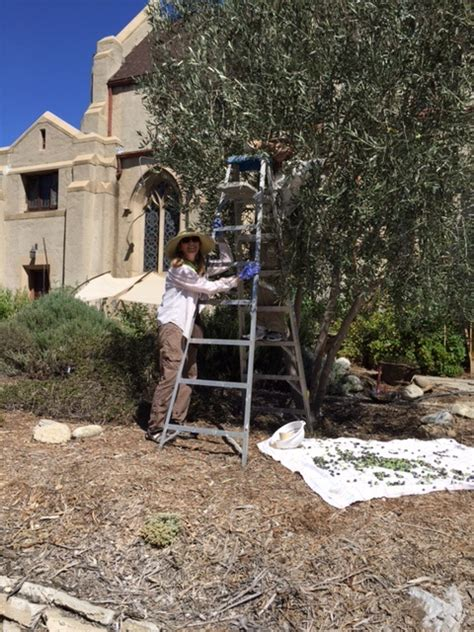 Olive Garden Pasadena by Throop Learning Garden Transition Pasadena