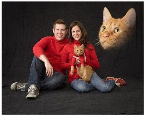 Awkward Cat Meme - another floating cat head cat family photo with matching