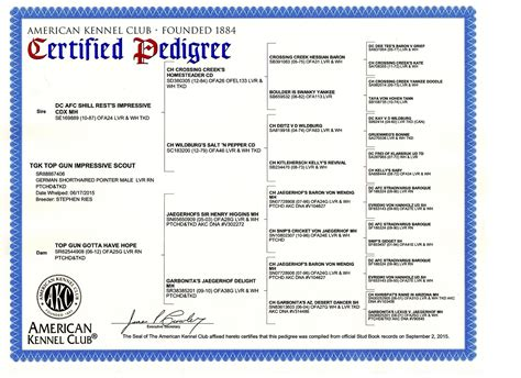 pedigree certificate template pedigree template gallery resume ideas