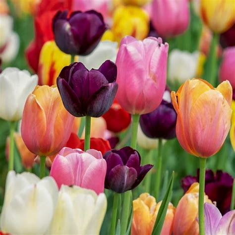 how do flowers get their color how flowers get their colors nature earth news