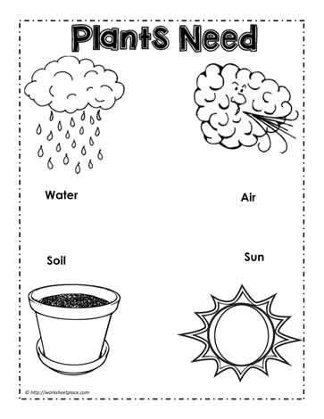what do plants need to grow worksheet image result for image of needs of plants kindergarten