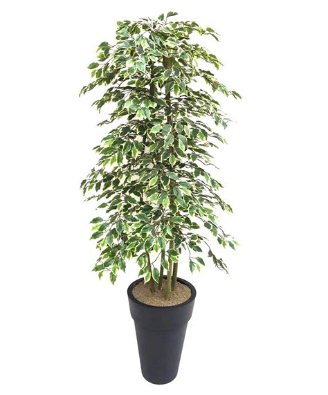 Planter Trees by Artificial Variegated Ficus Tree And Handbuilt Trees From