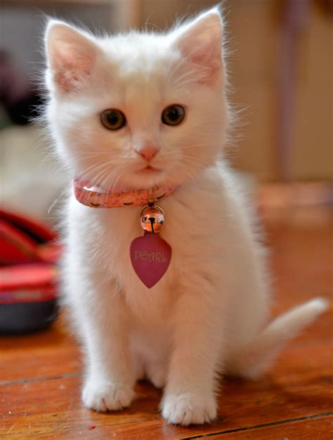 i love cats cute cat kitten pictures cute cat really cute cats and kittens white dogs small cat images