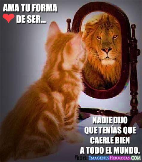 imagenes de leones con frases imagui imagenes de leones con frases imagui