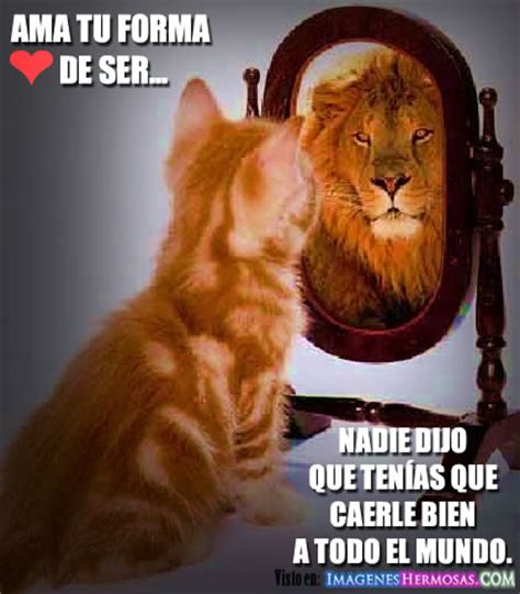 imagenes d leones con frases imagenes de leones con frases imagui