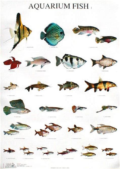 types of aquarium fish tropical fish types names tropical fish types with
