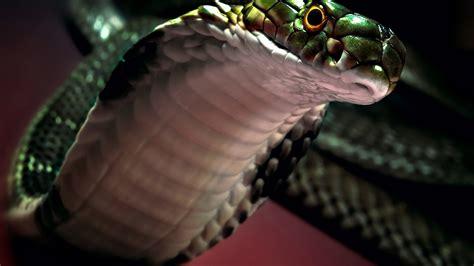 download film ular india cobra snake head desktop hd wallpaper stylishhdwallpapers