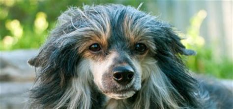 what causes hair loss in dogs what causes hair loss in dogs