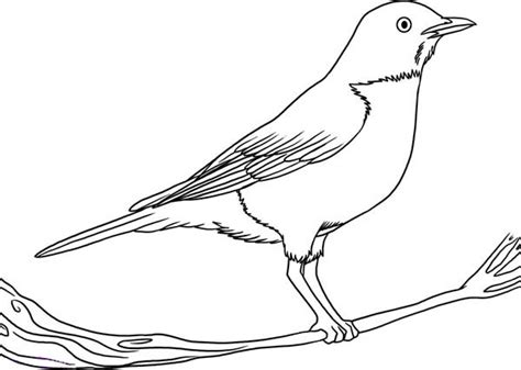 Robin  How To Draw Bird Coloring Page sketch template