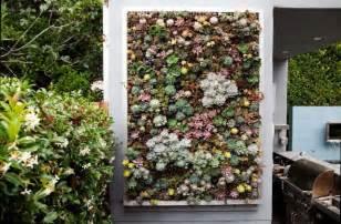Succulent Vertical Garden Growing A Vertical Wall Garden Of Succulents Living
