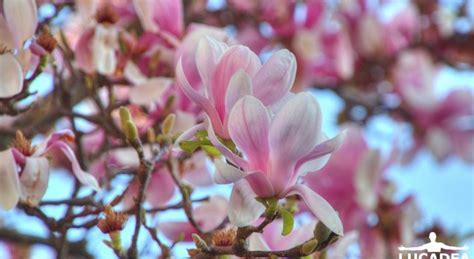 fiori rosa fiori rosa foto hdr