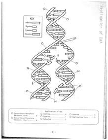 dna coloring worksheet dna replication