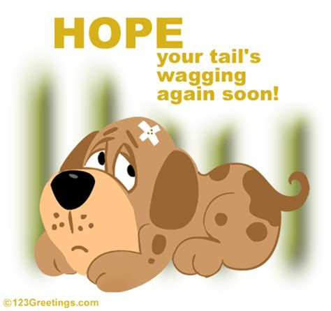 google images get well soon get well cards for pets google search dog lovers
