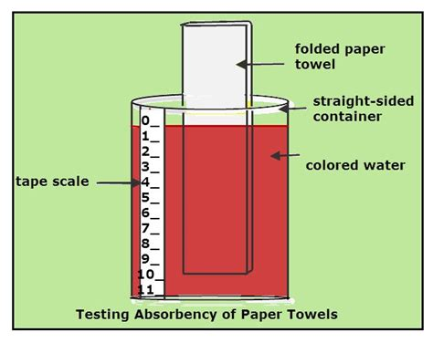 paper towel research 23 best images about science experiments on