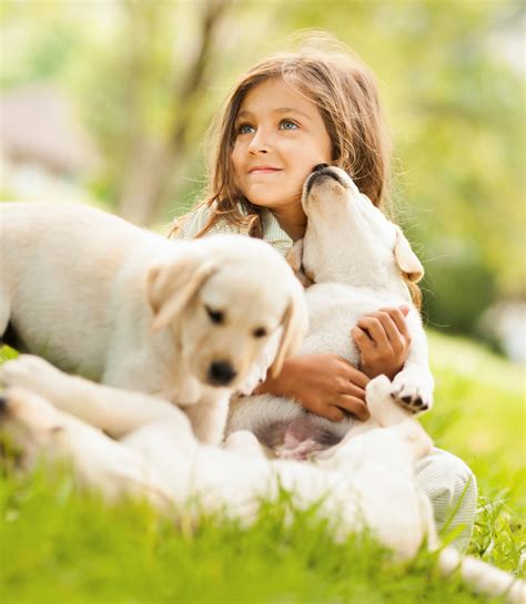 golden retriever with children best breeds for families lover s news