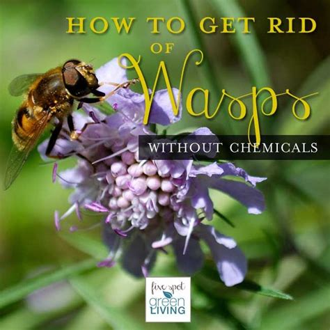 how to get rid of wasps in backyard best 25 wasp repellent ideas on pinterest bee repellent