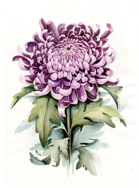best 25 botanical illustration ideas on botanical drawings botanical tattoo and