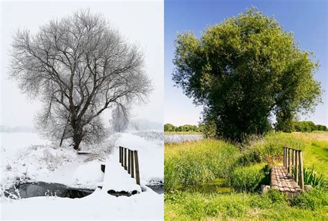 bettdecke sommer und winter winter vs sommer foto bild jahreszeiten natur bilder