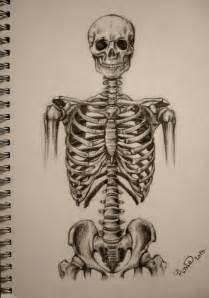 skeleton torso by stupidestusernameeve on deviantart