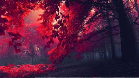 beautiful com beautiful pictures hd beautiful wallpapers beautiful