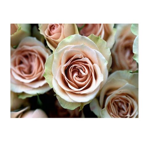roses that last forever giver her roses that will last forever kathy yates pale pink roses canvas art is available in