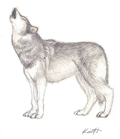 Sketches Wolf by Howling Wolf Sketch